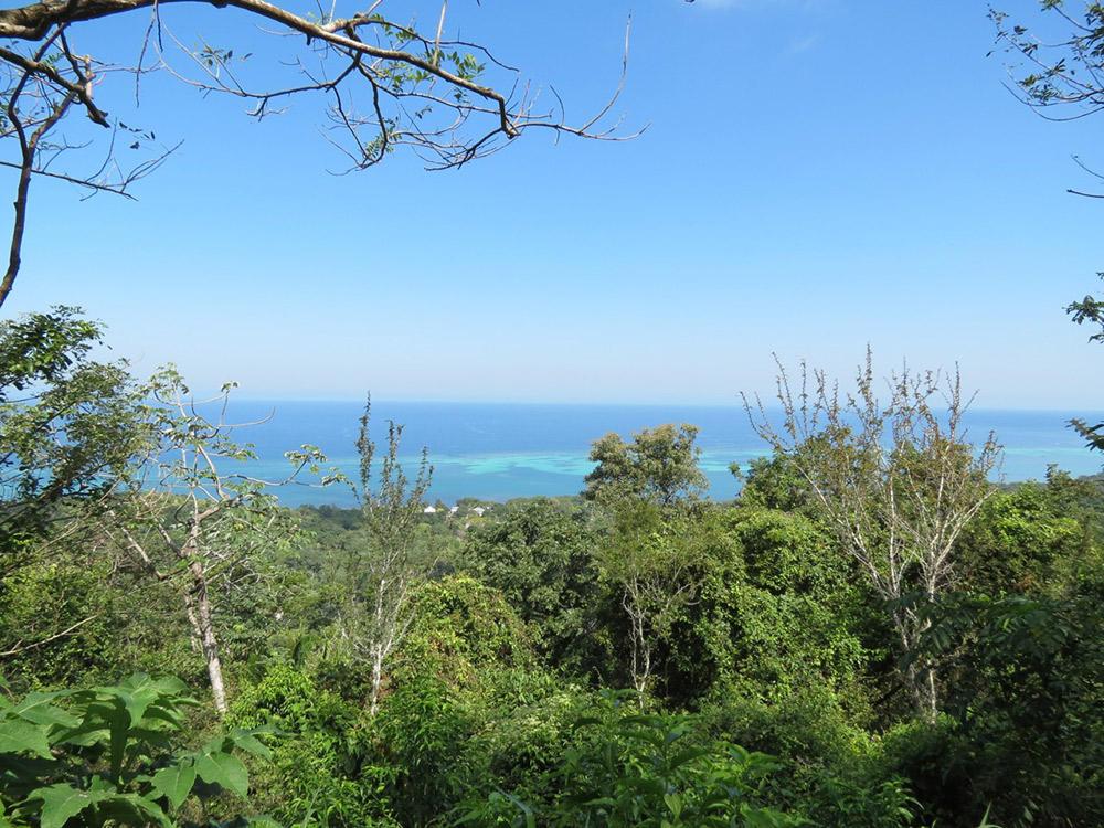 Roatan-Honduras-property-roatanlife16-530.jpg