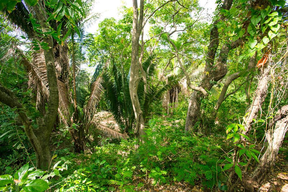 Roatan-Honduras-property-roatanlife16-264-6.jpg