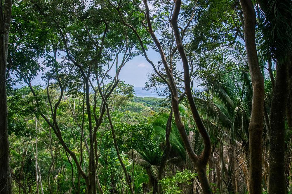 Roatan-Honduras-property-roatanlife16-264-8.jpg