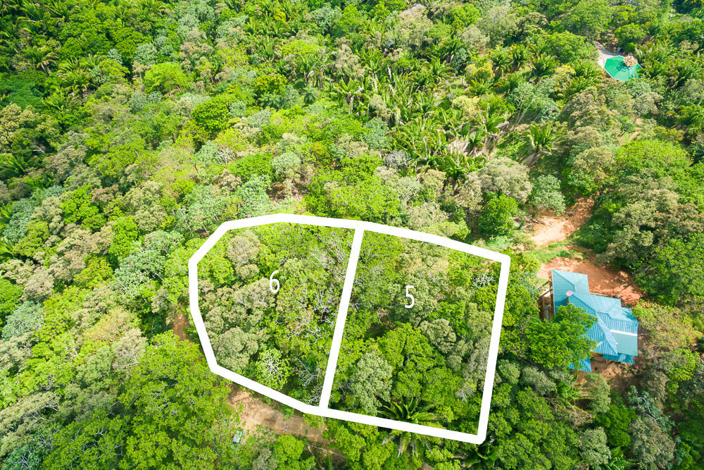 Roatan-Honduras-property-roatanlife16-264.jpg