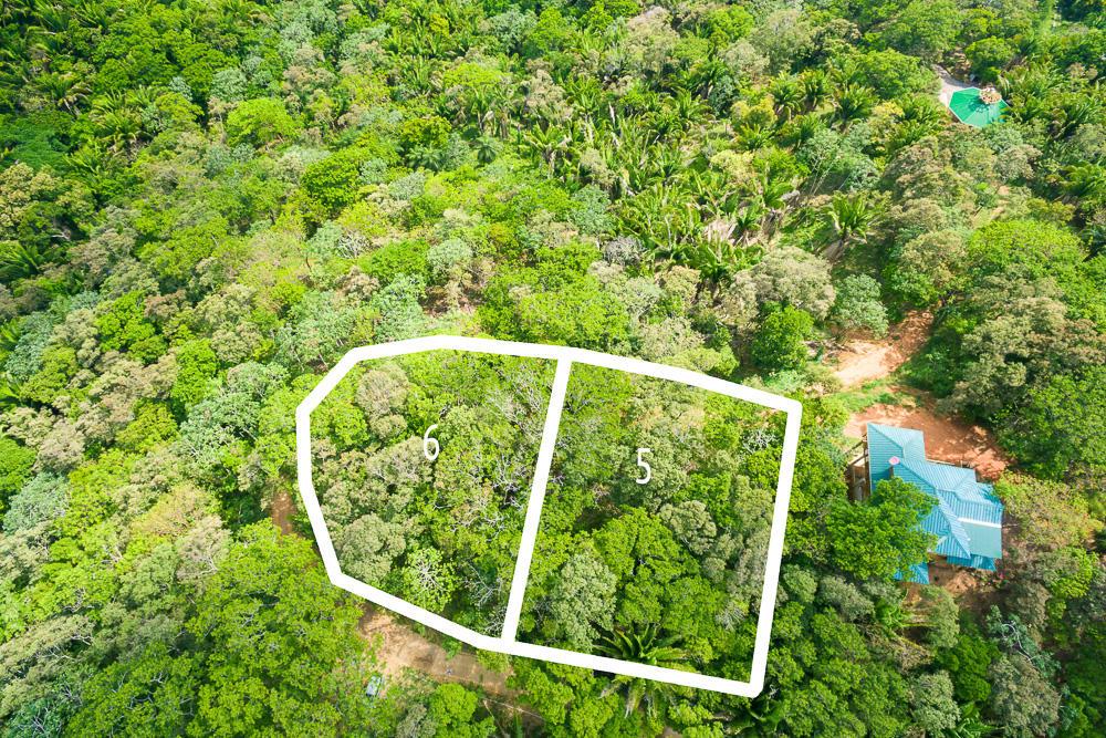 Roatan-Honduras-property-roatanlife16-265-2.jpg