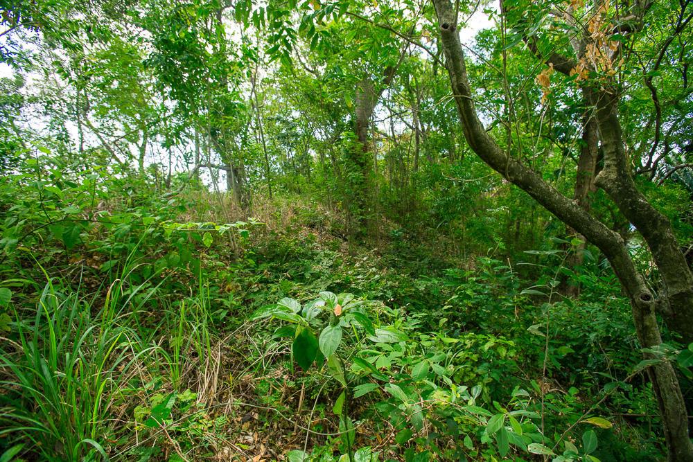 Roatan-Honduras-property-roatanlife16-265-6.jpg