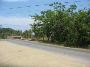 Honduras - Commercial/Residential Lot Parrot Tree
