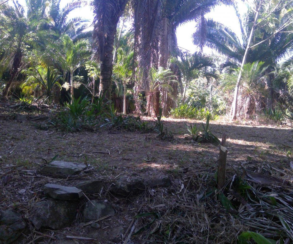 Roatan-Honduras-property-roatanlife18-159-11.jpg