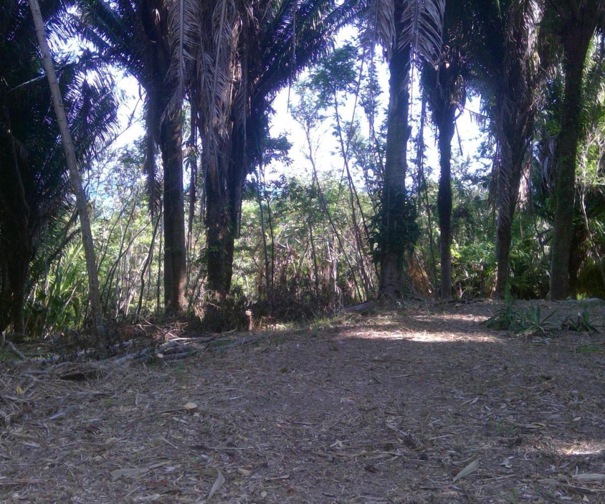 Roatan-Honduras-property-roatanlife18-159-4.jpg