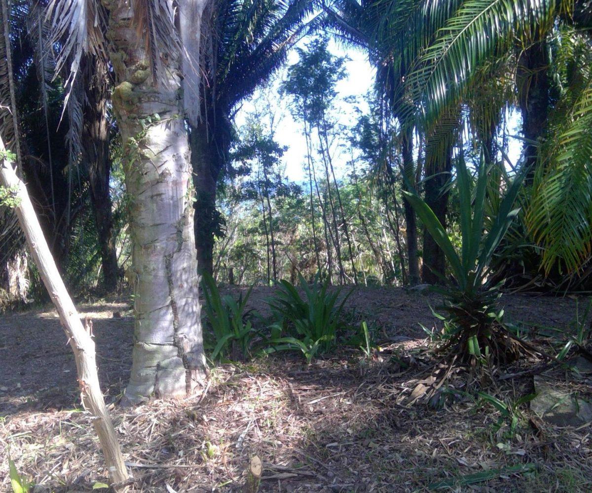 Roatan-Honduras-property-roatanlife18-159-7.jpg