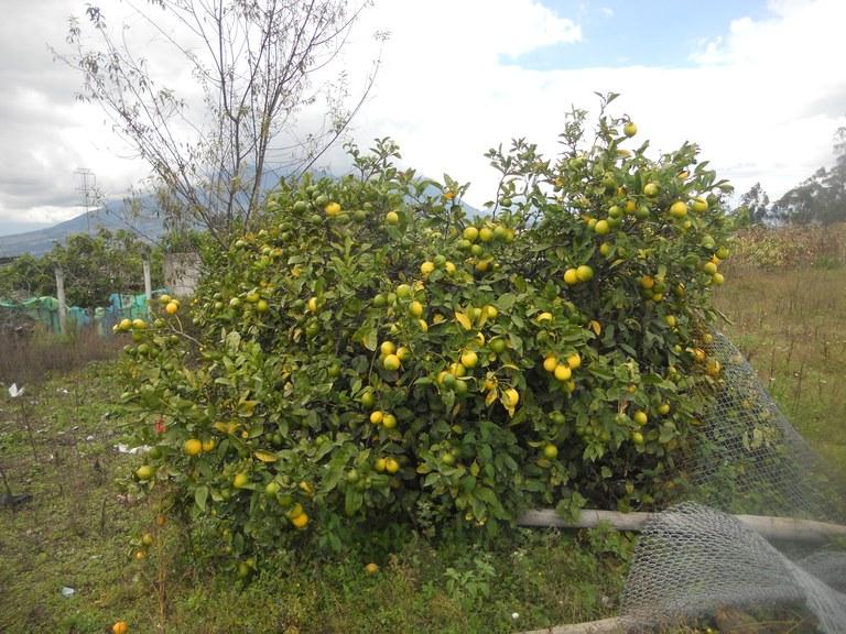 Cuicocha-Ecuador-property-RS1900242-2.jpg