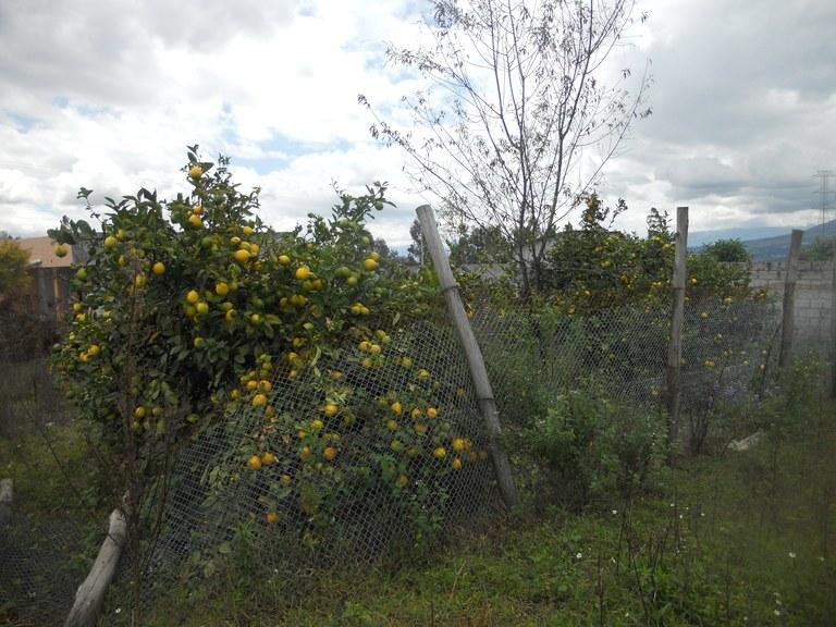 Cuicocha-Ecuador-property-RS1900242-4.jpg