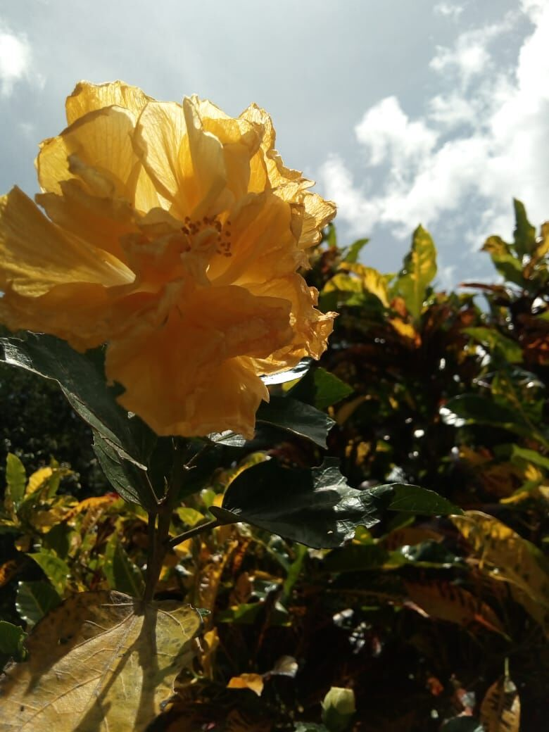San-Isidro-Costa-Rica-property-costaricarealestateSI049-11.jpeg