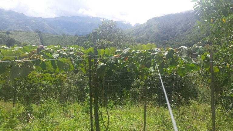 Intag-Ecuador-property-LL1900071-2.jpg