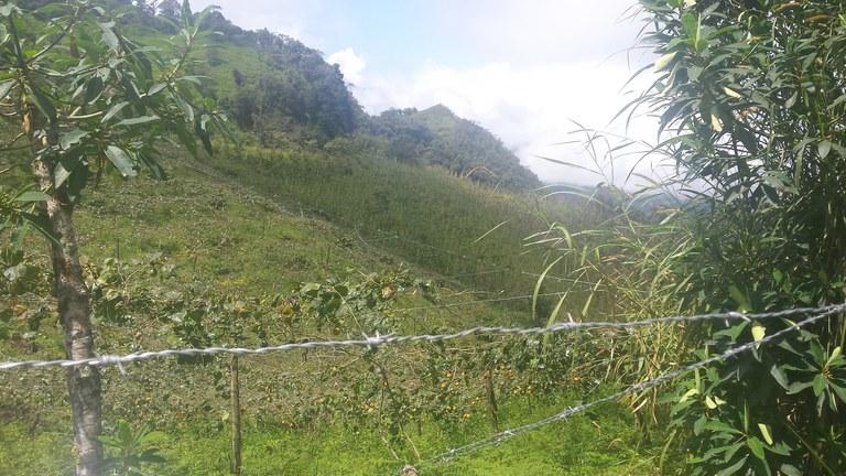 Intag-Ecuador-property-LL1900071-3.jpg