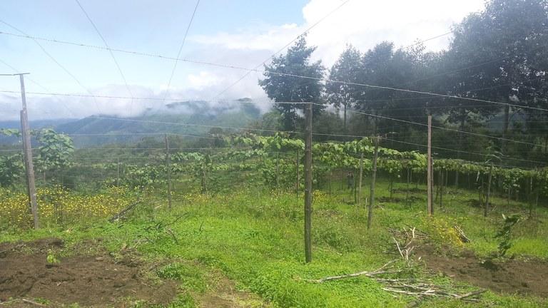 Intag-Ecuador-property-LL1900071-4.jpg