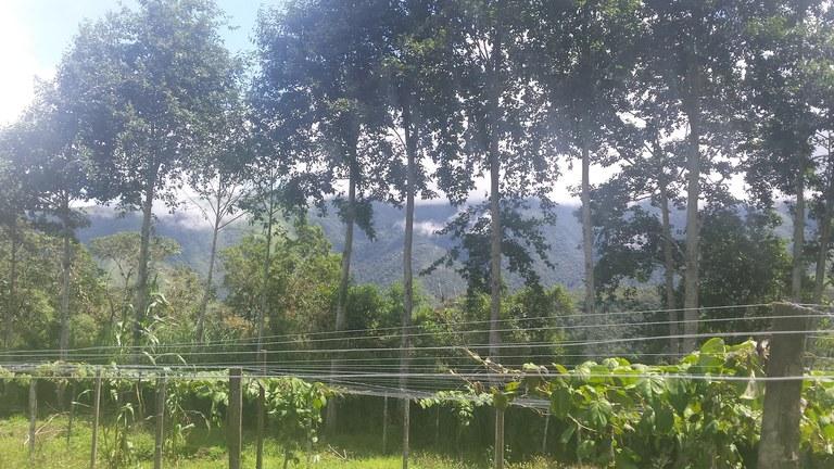 Intag-Ecuador-property-LL1900071.jpg