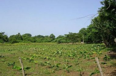 Aposentillo Nicaragua - 1.77 acres of land for Sale in Northern Nicaragua next to Surfing Nahua office