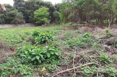 Olón Ecuador - OLON-Center Town: Grand Opportunity- Project Ready Land