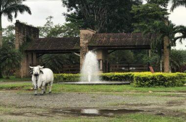 Cumandá Ecuador - Lakefront, Mountain and Countryside Agricultural Land/Farm For Sale in Cumandá