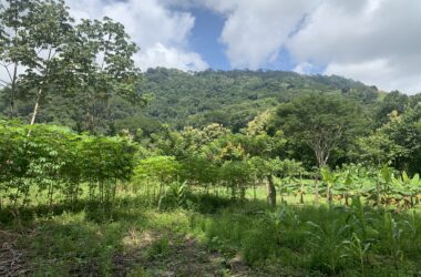 Dominical Costa Rica - 3.46 ACRES – Flat Usable Land With 3 Cabins, 136 Meters Of Paved Road Frontage!!!