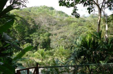 Gamboa Panama - Tropical Style Wooden Duplex for Sale in Gamboa