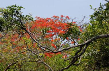 Aposentillo Nicaragua - 12.75 acre