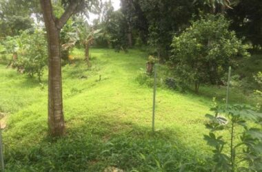 El Coco Panama - Land For Sale Potrero Grande, El Coco