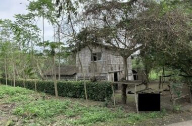 Dos Mangas Ecuador - Dos Mangas, Fruit tree paradise