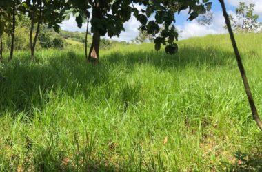 Los Pozos Panama - PROPERTY FOR SALE IN LA ONDA, LA PITALOZA, LOS POZOS, HERRERA PROVINCE. 98.842 ACRES (40 HA) OF LAND.